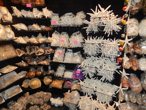 Wholesale sea shell wind chimes, chandeliers, night lites, novelties